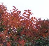 サンセットファームの圃場にも晩秋の気配