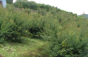 ヤフーオークションで出品地として紹介しているサンセットファームの梅畑