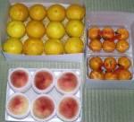 下の段にバレンシアオレンジ