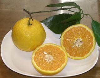 色も鮮やかで、ジューシーな峯岡農園のバレンシアオレンジ