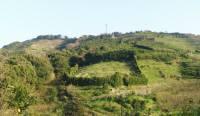 本社から見た衣笠山・右手に峯岡農園の梅畑が見える