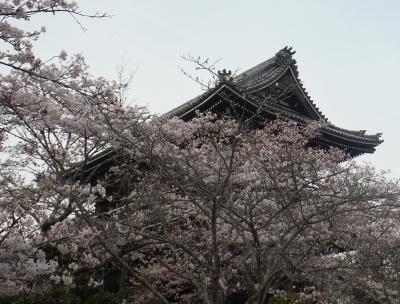 根来寺のさくら