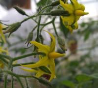 ハウス栽培で冬にかけて食味がよくなる