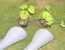 このヘラの部部の上に苗を植えつけます