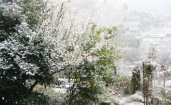 サンセットファーム研究所も雪が例年になく積もった
